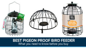 Best Pigeon Proof Bird Feeder