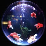 Best Aquariums in UK