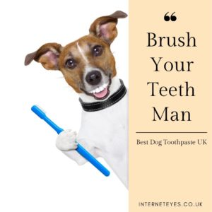 Best Dog Toothpaste UK