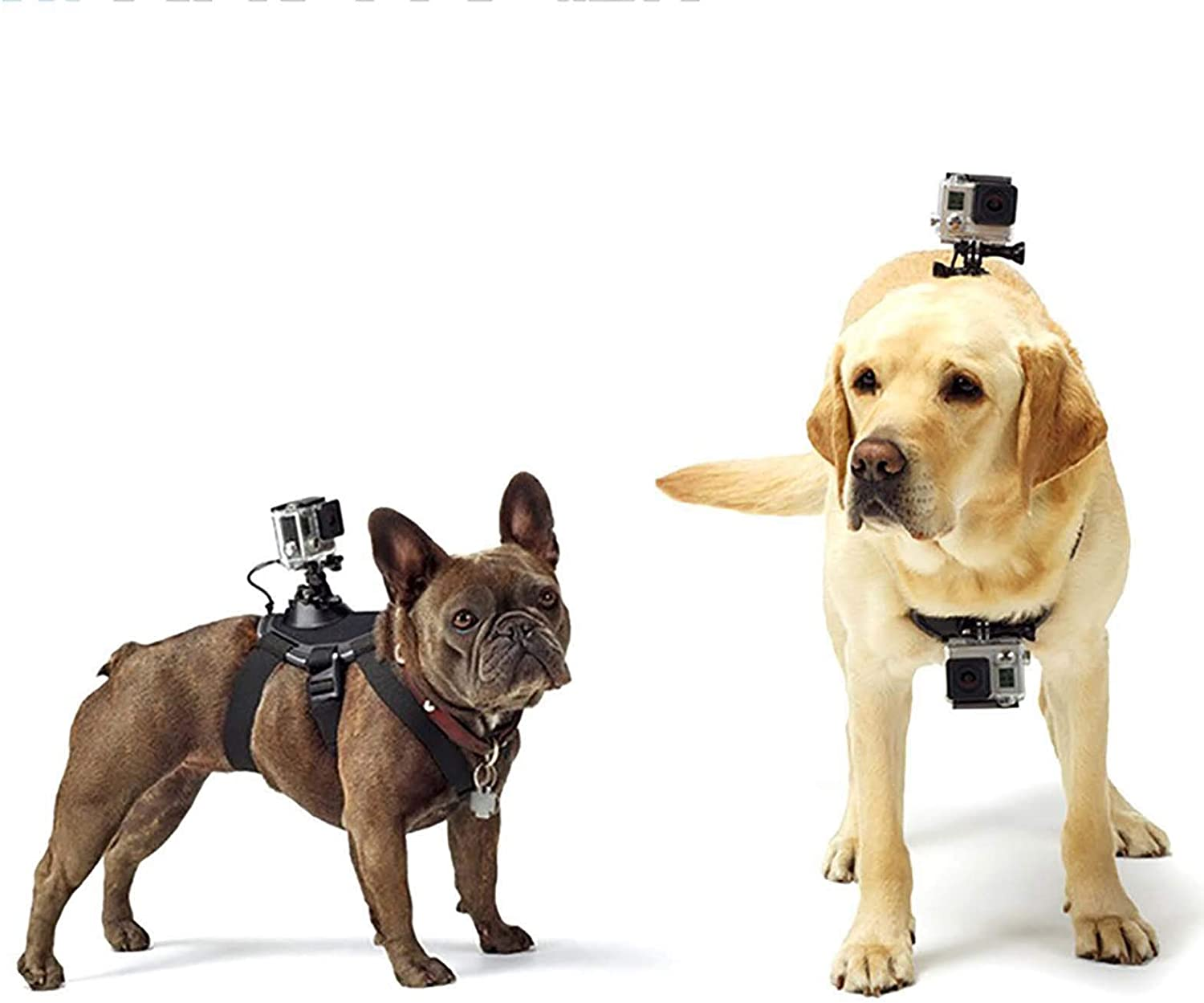 Adjustable Dog Harness with Sports Camera