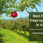 Fruit Trees to Grow in UK