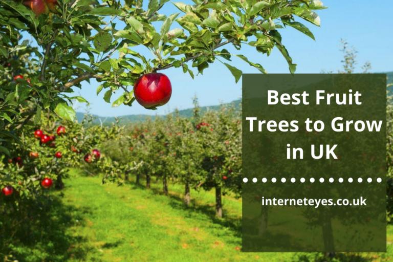 Fruit Trees to Grow in UK