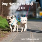BEST DOG HARNESS TO STOP PULLING UK