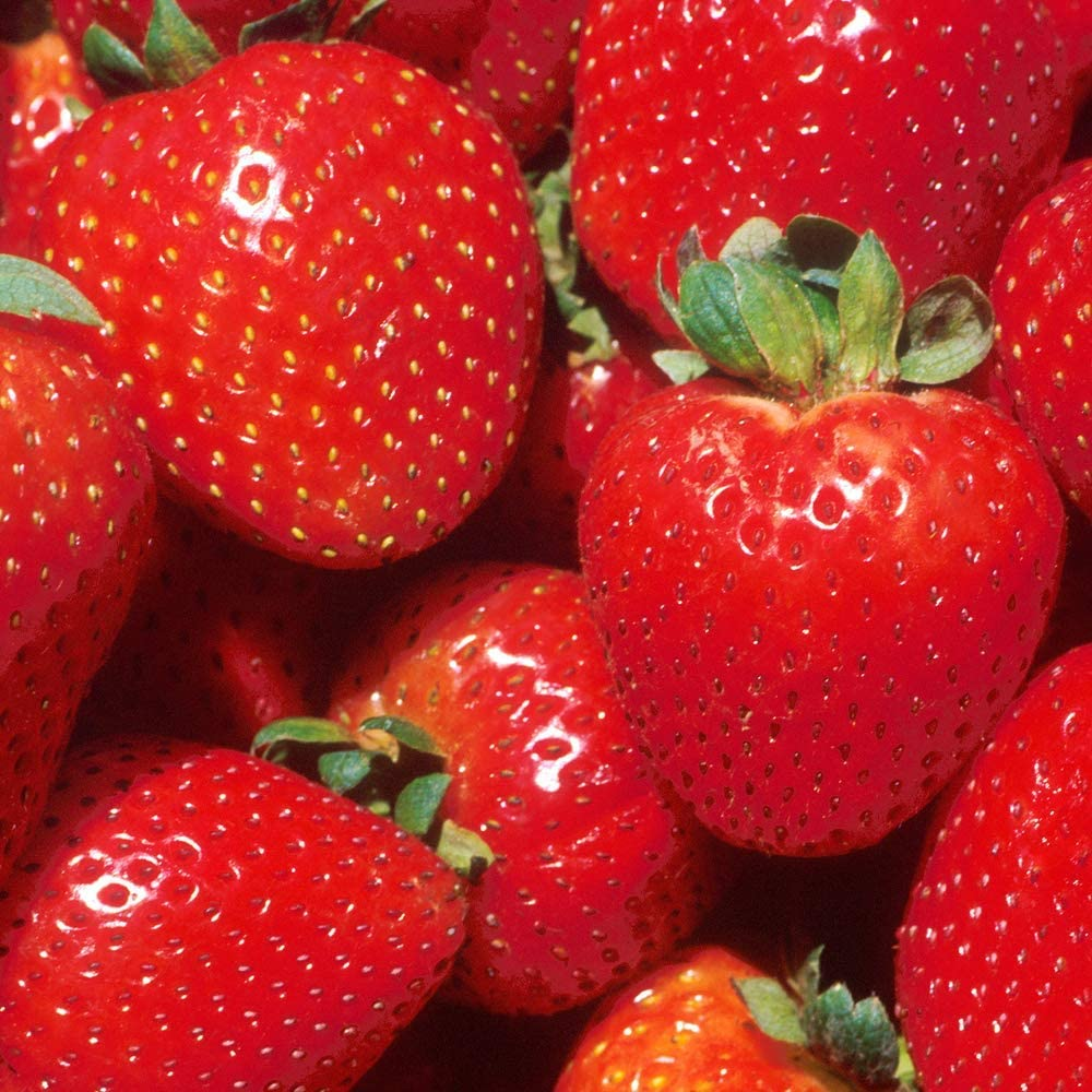Strawberry 'Marshmello' Fast-Growing Bare Root Garden Bush Fruit Plants (5 Plants)