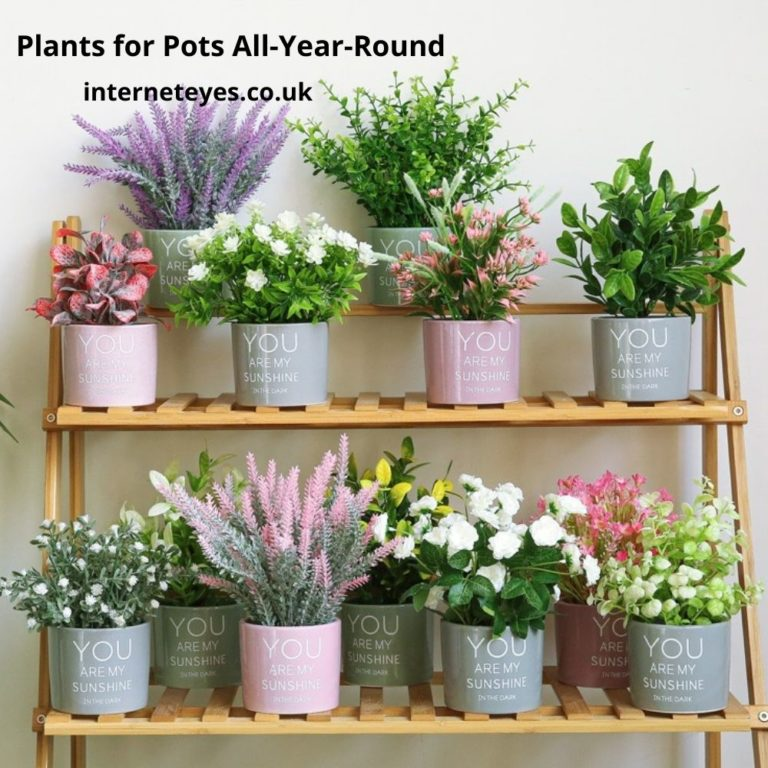 Top Plants for Pots All-Year-Round UK