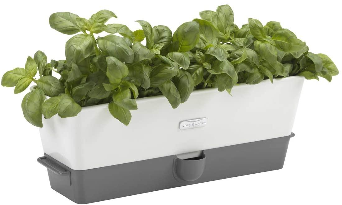 Aromatic Herb Kitchen Garden